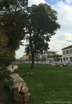 """Una sofora c'è già nel Parco: si trova nel prato lungo via Segantini, all'altezza del """"Tronco"""""""