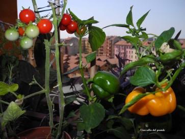 Rossella del Grande: rosso verde giallo, il mio orto al sesto piano.
